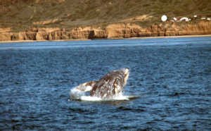 Whale Watching Charter Zolna Yachts