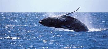 Whale Watching Cruise Zolna Yachts